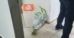 רמי הדר קיבל פרחים ממכבי, הושלכו ליד פח זבל