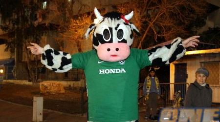 אוהד חיפה מחופש לפרה (יניב גונן)