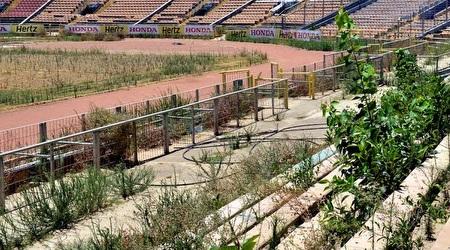 אצטדיון קריית אליעזר (צבי רוגר, עיריית חיפה)