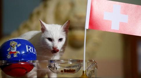 אכילס החתול בוחר בשווייץ (רויטרס)