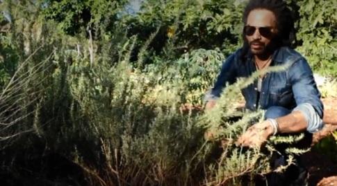 קרביץ. מגדל את האוכל שלו בעצמו (צילום מסך)