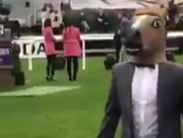 בזמן הצגת הסוסים במירוץ, בחור אחד התחפש לסוס והצטרף לשיירה
