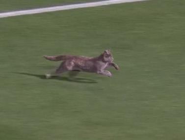 כנראה החיה המהירה ביותר שפרצה למגרש