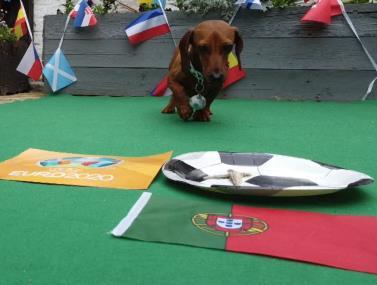 הכלבלב ניחש: מי תנצח פורטוגל או צרפת?