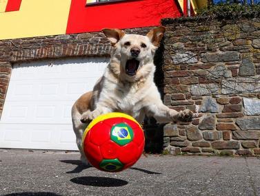 הכלבלב שהפך לויראלי הרבה בזכות היכולת לשמור על הכדור