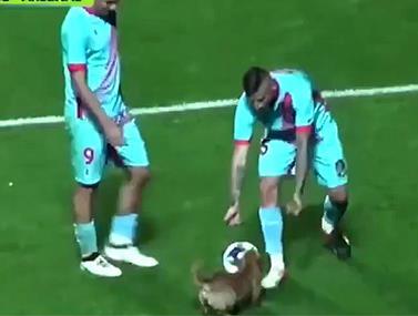באמצע משחק במסגרת הליגה הארגנטינאית כלב פרץ לדשא