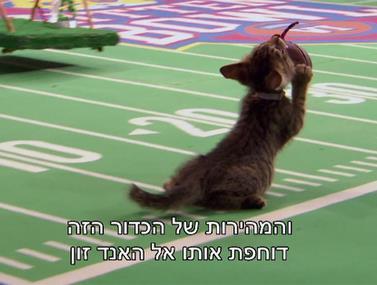 פוטבול חתולים, כזה עוד לא ראינו